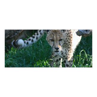 Cheetah on the hunt 10 cm x 24 cm invitation card