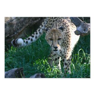 Cheetah on the hunt 13 cm x 18 cm invitation card