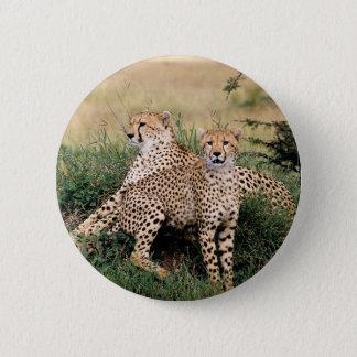 Cheetah Pair 6 Cm Round Badge