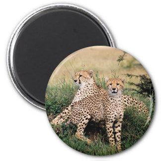 Cheetah Pair Fridge Magnets