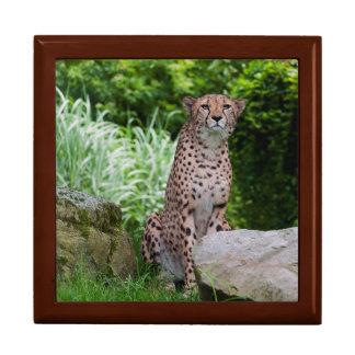 Cheetah Photo Large Square Gift Box