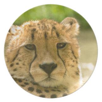 Cheetah Plate