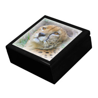 Cheetah portrait gift box