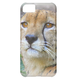 Cheetah portrait iPhone 5C case