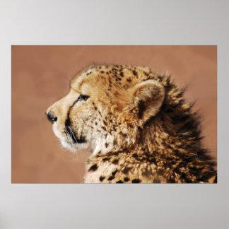 Cheetah Prince Poster