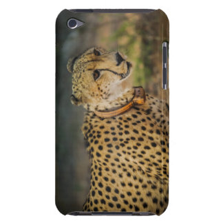 Cheetah Print Spots Barely There iPod Covers
