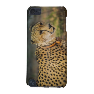 Cheetah Print Spots iPod Touch (5th Generation) Case