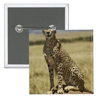 Cheetah resting, Acinonyx jubatus, Masai Mara, 15 Cm Square Badge