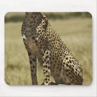 Cheetah resting Acinonyx jubatus Masai Mara Mouse Pads