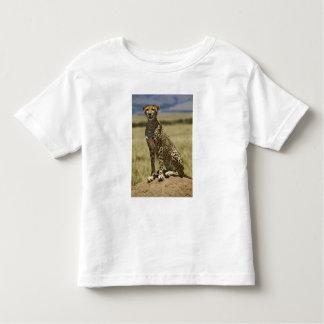Cheetah resting, Acinonyx jubatus, Masai Mara, Shirt