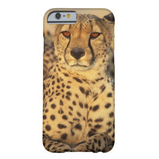 Cheetah, Resting male Barely There iPhone 6 Case