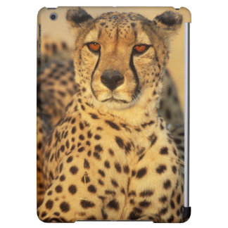 Cheetah, Resting male Case For iPad Air