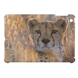 Cheetah Resting male Case For The iPad Mini