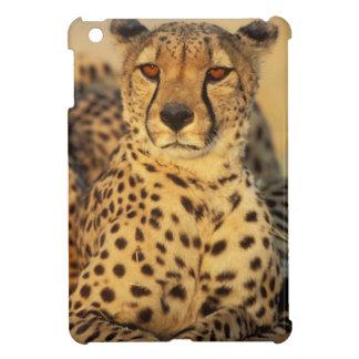 Cheetah, Resting male iPad Mini Case