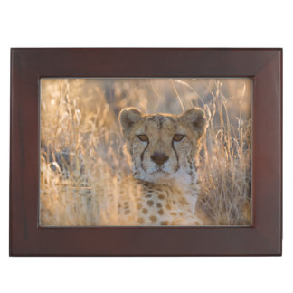 Cheetah Resting male Keepsake Boxes