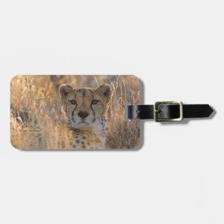Cheetah Resting male Luggage Tag