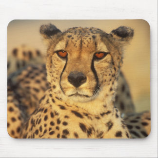 Cheetah, Resting male Mouse Mat