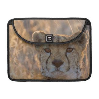 Cheetah Resting male Sleeve For MacBooks