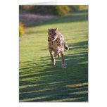 Cheetah Running Card