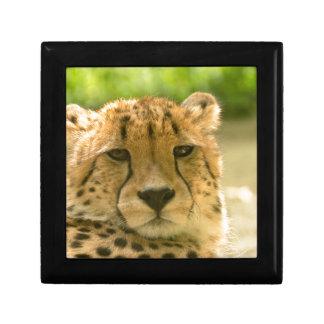 Cheetah Small Square Gift Box
