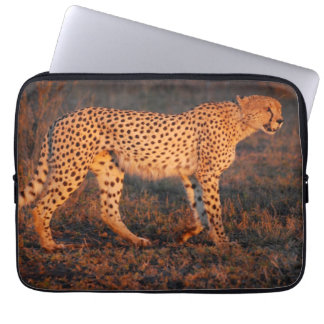 Cheetah South Africa at Sunset Laptop Sleeves