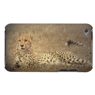 Cheetah Spots iTouch Case iPod Touch Covers