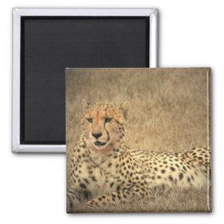 Cheetah Spots Magnet