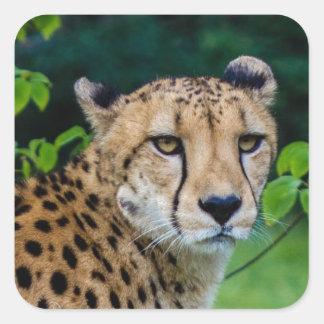 Cheetah Square Sticker