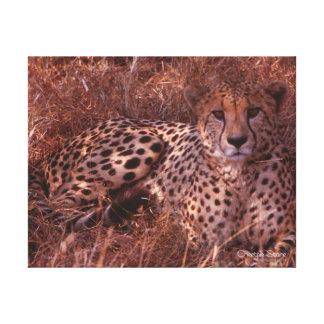 Cheetah Stare Gallery Wrap Canvas