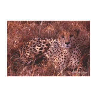 Cheetah Stare Canvas Print