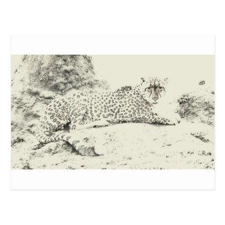 Cheetah Stare Tom Wurl.jpg Postcard
