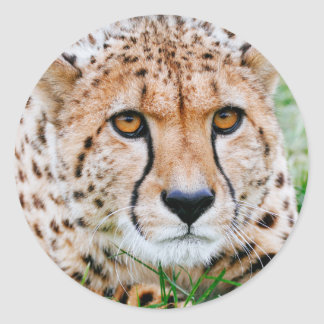 Cheetah Stickers