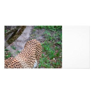 cheetah tail end animal feline wildlife personalised photo card