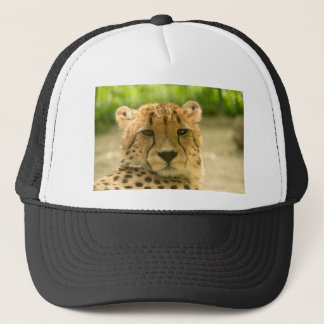 Cheetah Trucker Hat