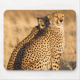 Cheetah, Two males Mouse Mat