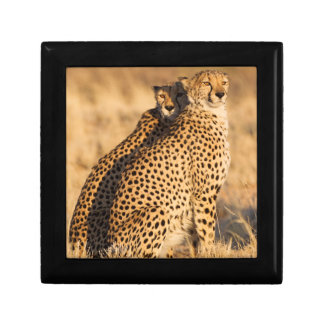 Cheetah, Two males Small Square Gift Box