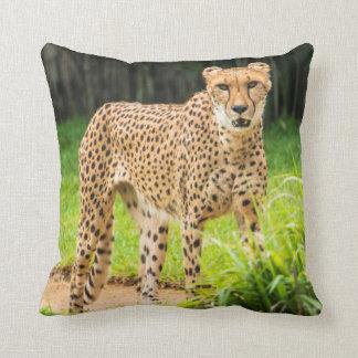 Cheetah Walks along a Path Cushion
