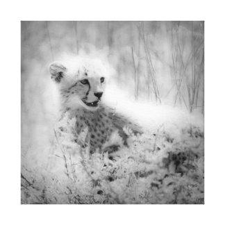 Cheetah's cub Wrapped Canvas Stretched Canvas Prints
