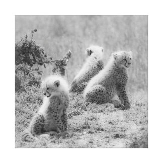 Cheetah's cubs stretched canvas print