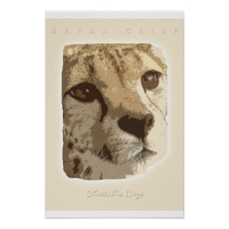 Cheetah's Gaze Photo Graphic Art Print by B. Crisp