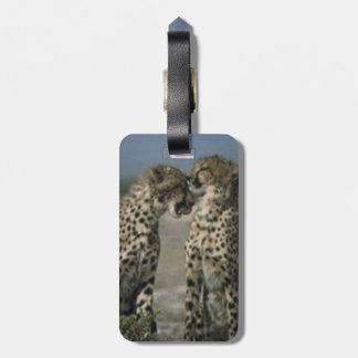 Cheetahs in Love Luggage Tag