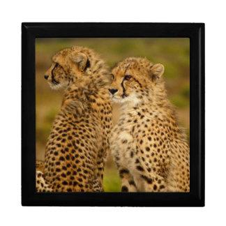 Cheetahs Large Square Gift Box
