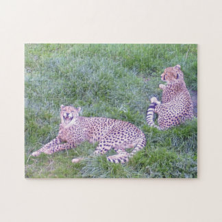 Cheetahs lying in grass jigsaw puzzle