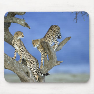 Cheetahs Mouse Mat