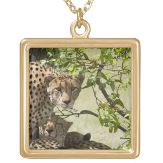 Cheetahs rest in the shade gold plated necklace