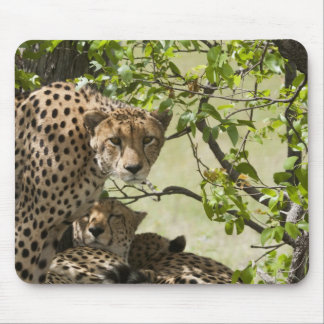 Cheetahs rest in the shade mouse mat