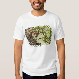 Cheetahs rest in the shade t-shirts