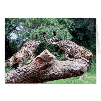 Cheetahs Tails Crossed Card
