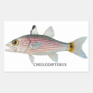 CHEILODIPTERUS RECTANGULAR STICKER
