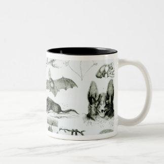 Cheiroptera, Insectivora Coffee Mug